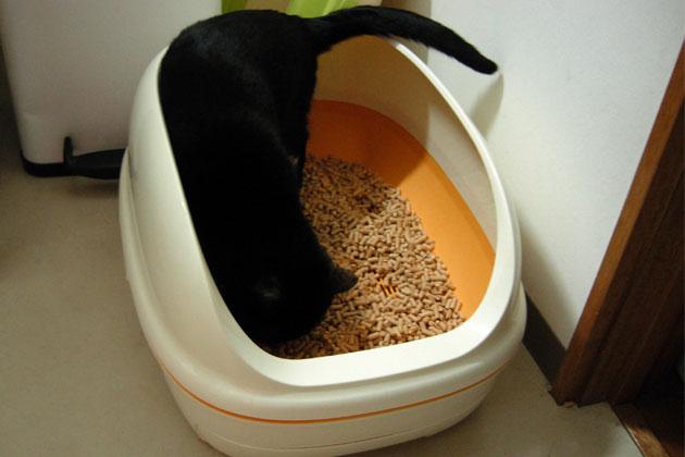 Older cat not peeing in litter box