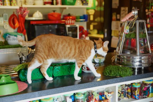 画家・ヒグチユウコ × ボリス — 手間のかかる猫ほどかわいい